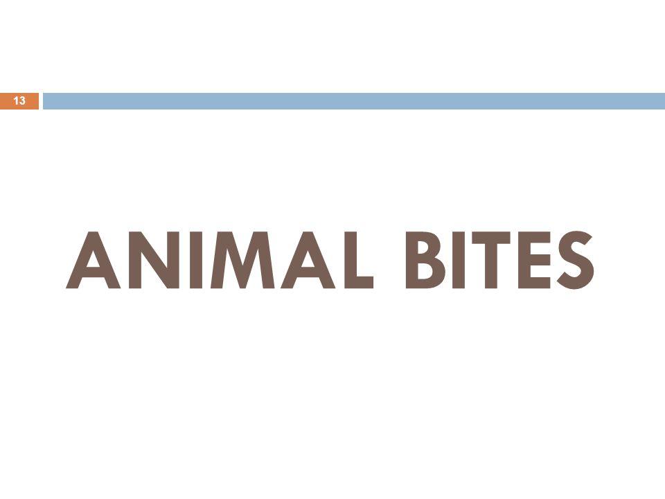 ANIMAL BITES 13