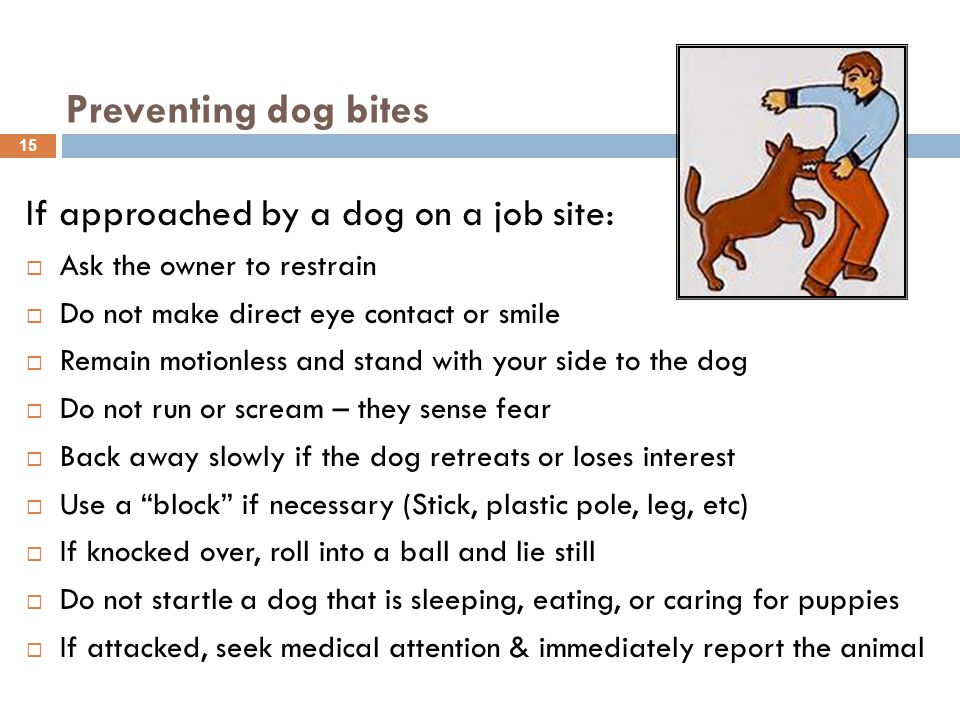 If approached by a dog on a job site:  Ask the owner to restrain  Do not make direct eye contact or smile  Remain motionless and stand with your side to the dog  Do not run or scream – they sense fear  Back away slowly if the dog retreats or loses interest  Use a block if necessary (Stick, plastic pole, leg, etc)  If knocked over, roll into a ball and lie still  Do not startle a dog that is sleeping, eating, or caring for puppies  If attacked, seek medical attention & immediately report the animal 15 Preventing dog bites