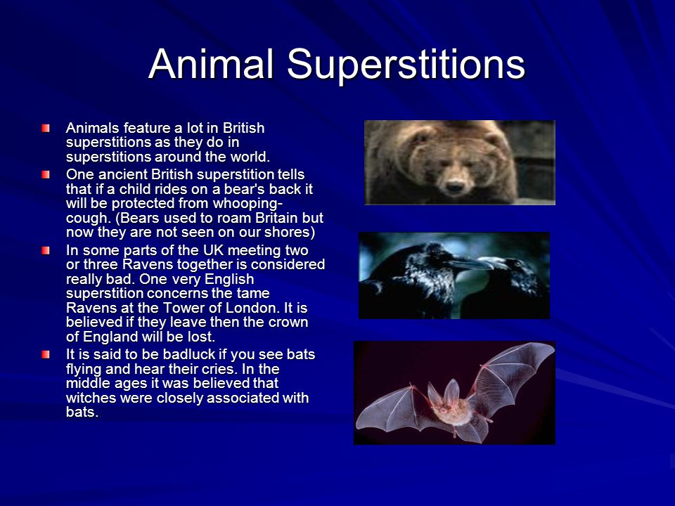 Animal Superstitions Animals feature a lot in British superstitions as they do in superstitions around the world. One ancient British superstition tel