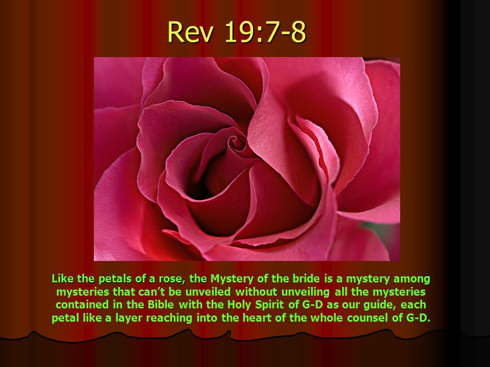 Rev 19:7-8 Like the petals of a rose, the Mystery of the bride is a mystery among mysteries that can't be unveiled without unveiling all the mysteries contained in the Bible with the Holy Spirit of G-D as our guide, each petal like a layer reaching into the heart of the whole counsel of G-D.