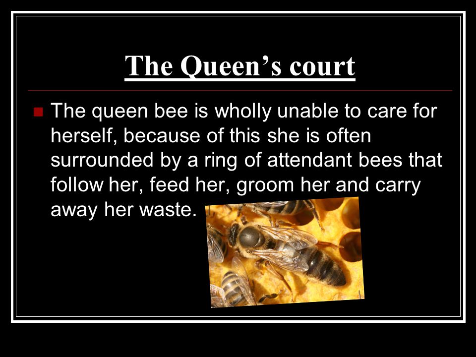 The Queen's court The queen bee is wholly unable to care for herself, because of this she is often surrounded by a ring of attendant bees that follow her, feed her, groom her and carry away her waste.