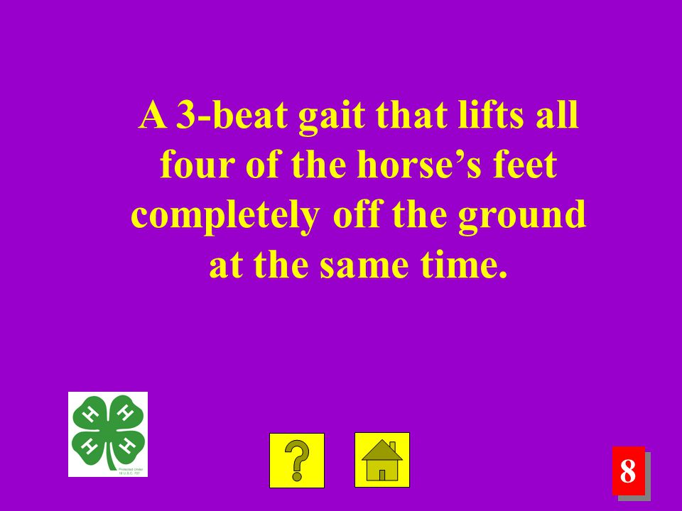 7 7 8 8 A 3-beat gait that lifts all four of the horse's feet completely off the ground at the same time.