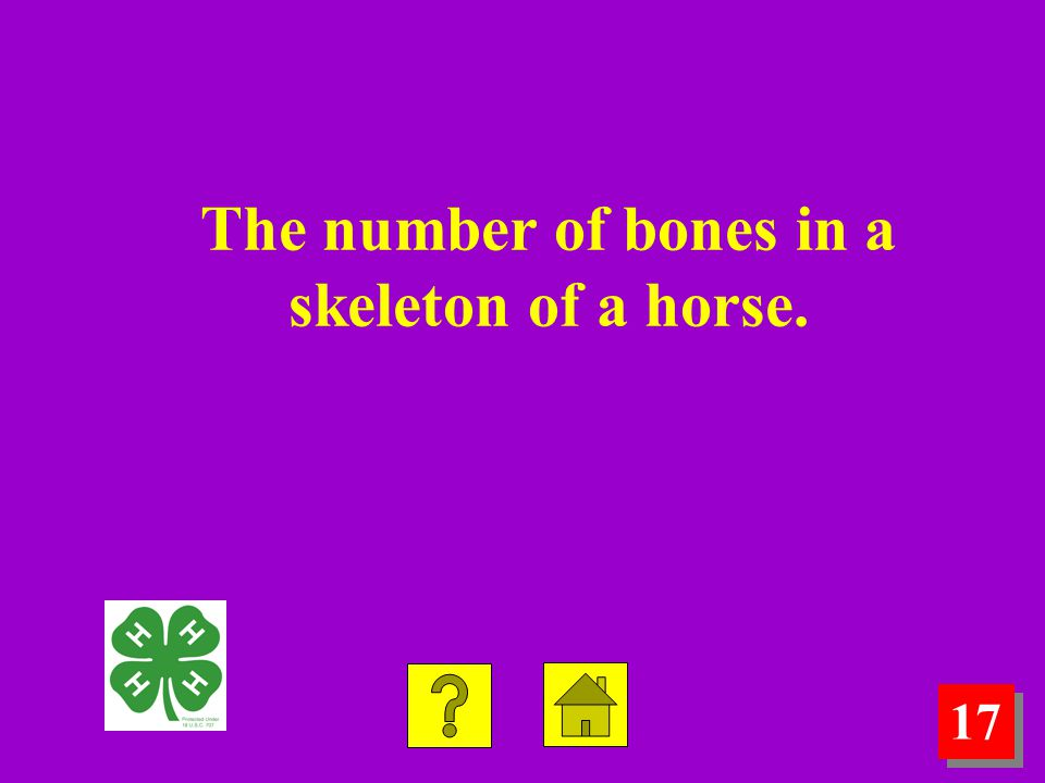 17 The number of bones in a skeleton of a horse.