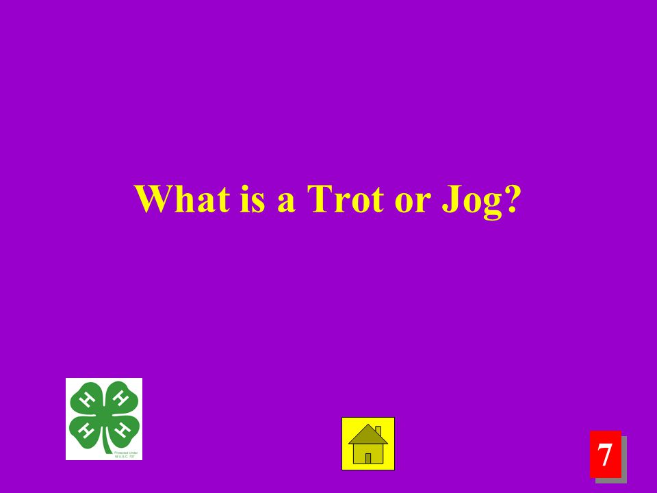 7 7 What is a Trot or Jog?