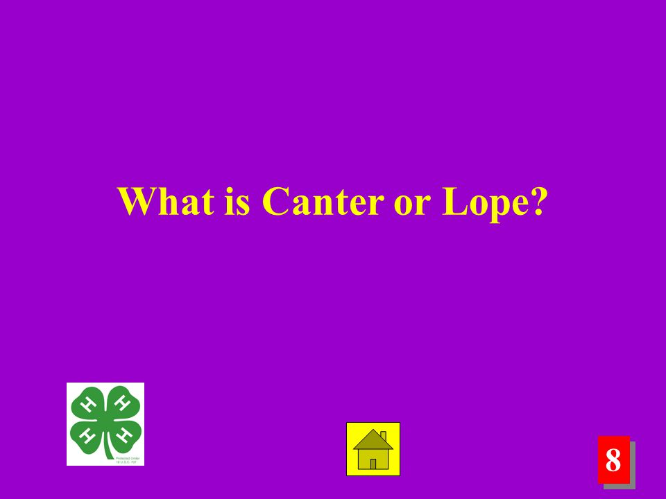 8 8 What is Canter or Lope