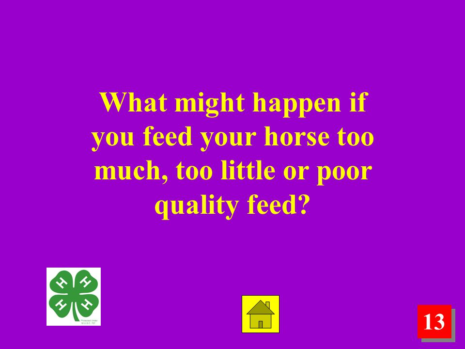 13 What might happen if you feed your horse too much, too little or poor quality feed?