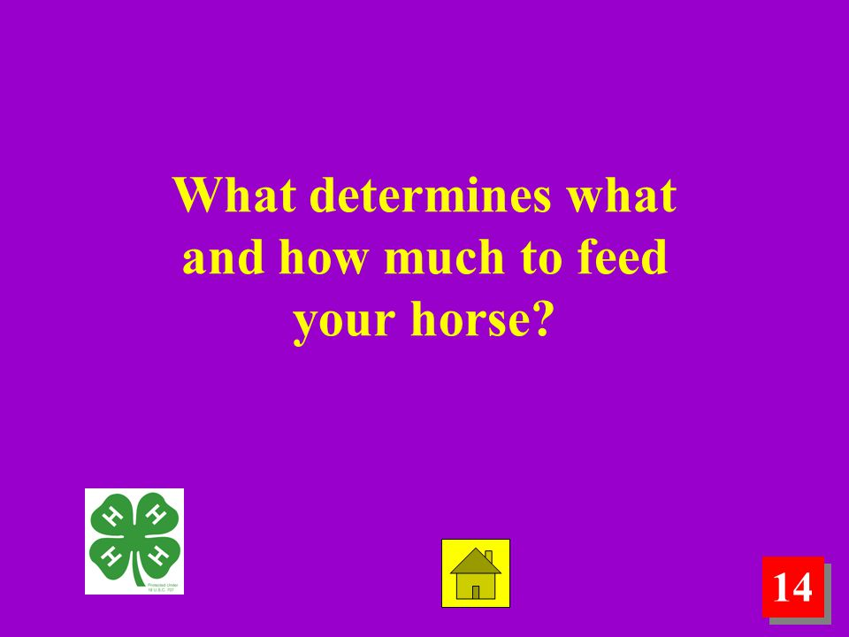 14 What determines what and how much to feed your horse