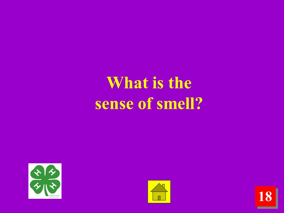 18 What is the sense of smell?