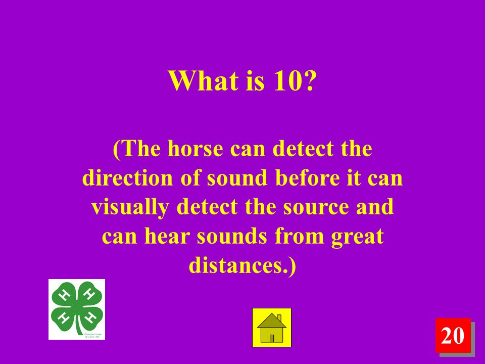 20 What is 10? (The horse can detect the direction of sound before it can visually detect the source and can hear sounds from great distances.)