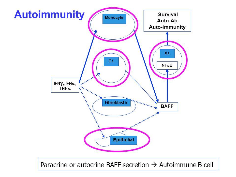 IFN  IFN  TNF  Monocyte Epithelial T BAFF Survival Auto-Ab Auto-immunity B NF  B Fibroblastic Paracrine or autocrine BAFF secretion  Autoimmune B cell Autoimmunity