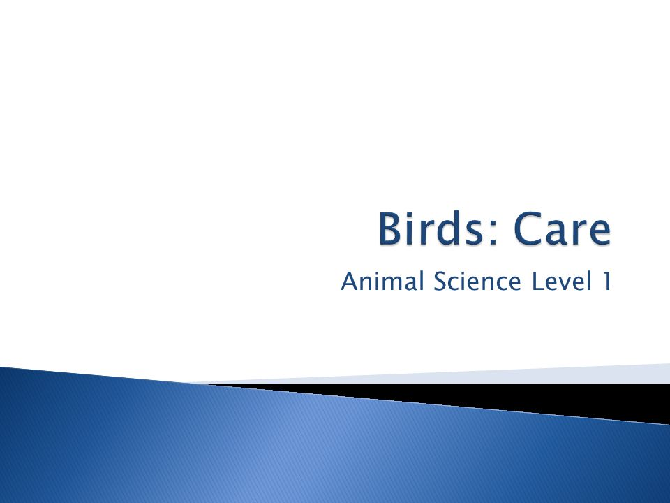 Animal Science Level 1
