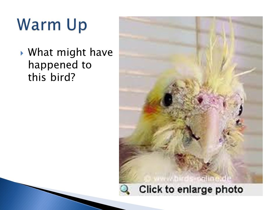  What might have happened to this bird