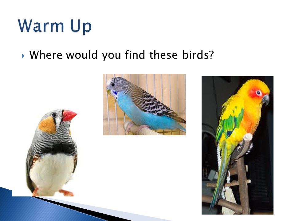  Where would you find these birds