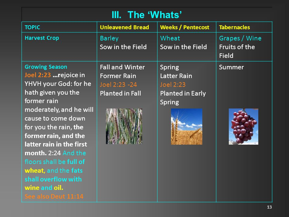 13 III. The 'Whats' TOPICUnleavened BreadWeeks / PentecostTabernacles Harvest Crop Barley Sow in the Field Wheat Sow in the Field Grapes / Wine Fruits