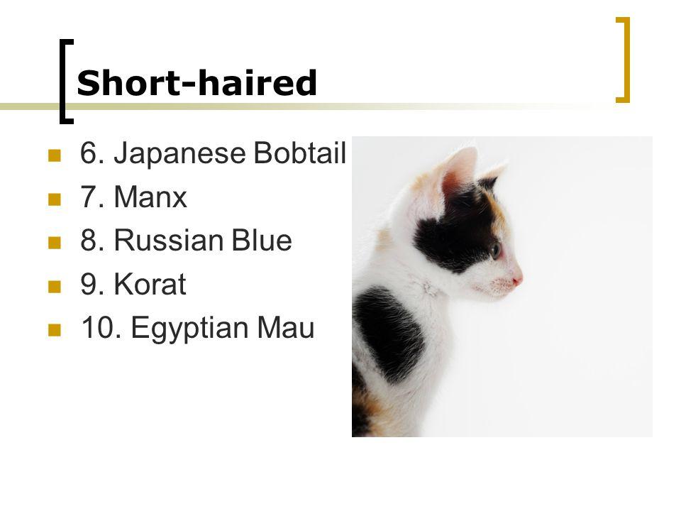 Short-haired 6. Japanese Bobtail 7. Manx 8. Russian Blue 9. Korat 10. Egyptian Mau