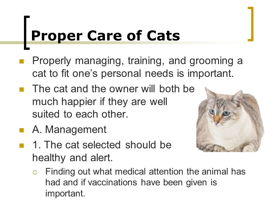 Proper Care of Cats Properly managing, training, and grooming a cat to fit one's personal needs is important.