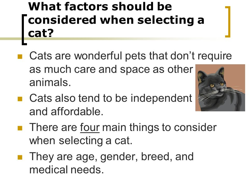 What factors should be considered when selecting a cat.
