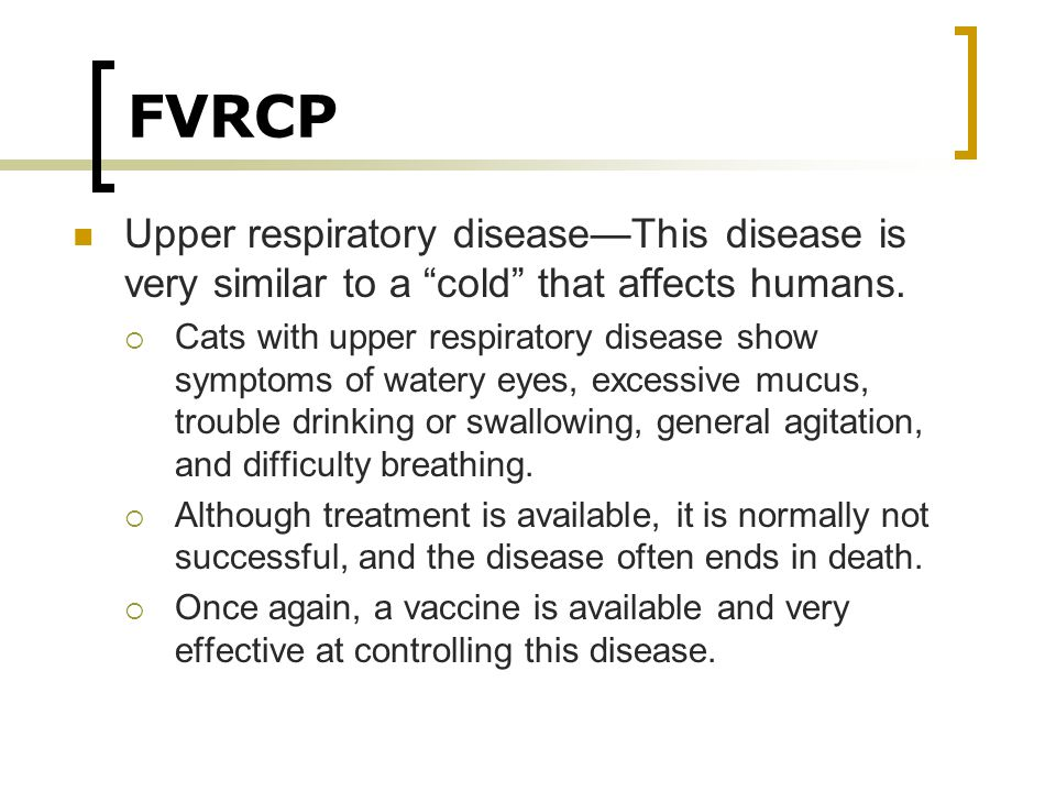 FVRCP Upper respiratory disease—This disease is very similar to a cold that affects humans.