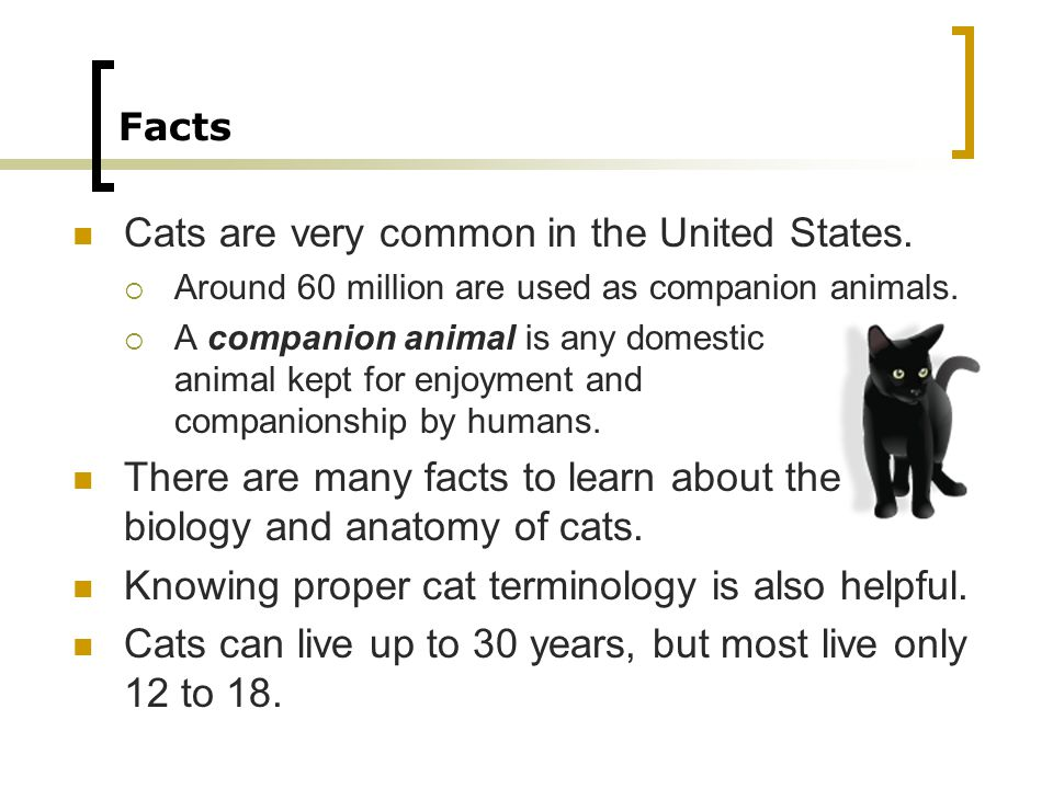 Facts Cats are very common in the United States. Around 60 million are used as companion animals.