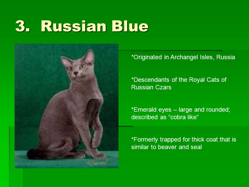 3. Russian Blue *Originated in Archangel Isles, Russia *Descendants of the Royal Cats of Russian Czars *Emerald eyes – large and rounded; described as