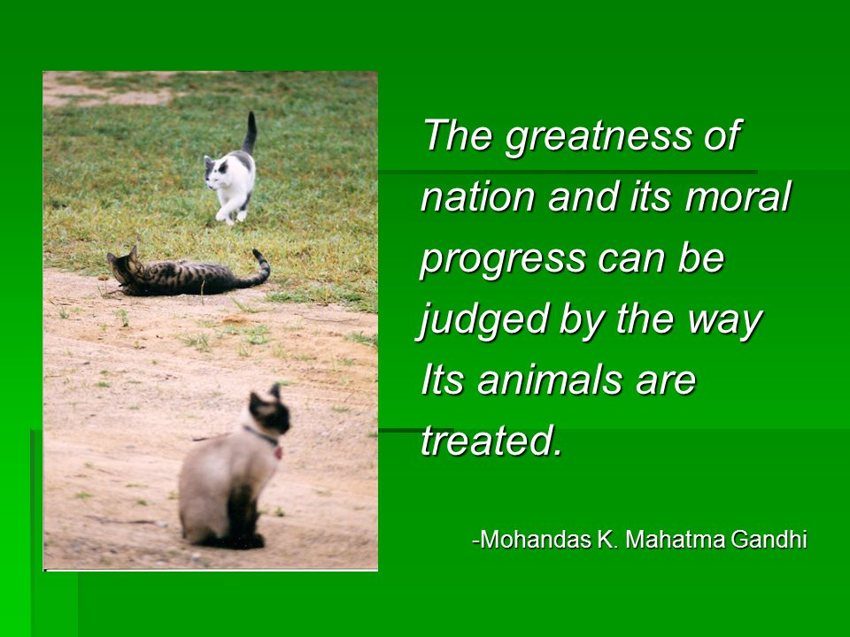 The greatness of nation and its moral progress can be judged by the way Its animals are treated. -Mohandas K. Mahatma Gandhi -Mohandas K. Mahatma Gand