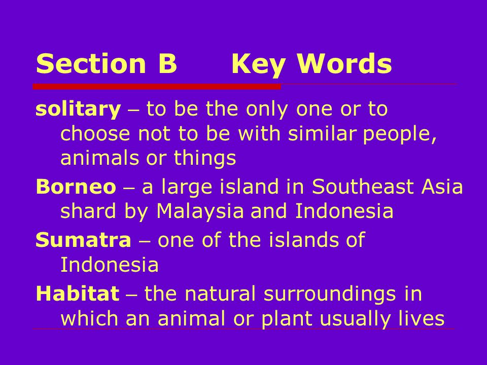Section BKey Words solitary – to be the only one or to choose not to be with similar people, animals or things Borneo – a large island in Southeast Asia shard by Malaysia and Indonesia Sumatra – one of the islands of Indonesia Habitat – the natural surroundings in which an animal or plant usually lives