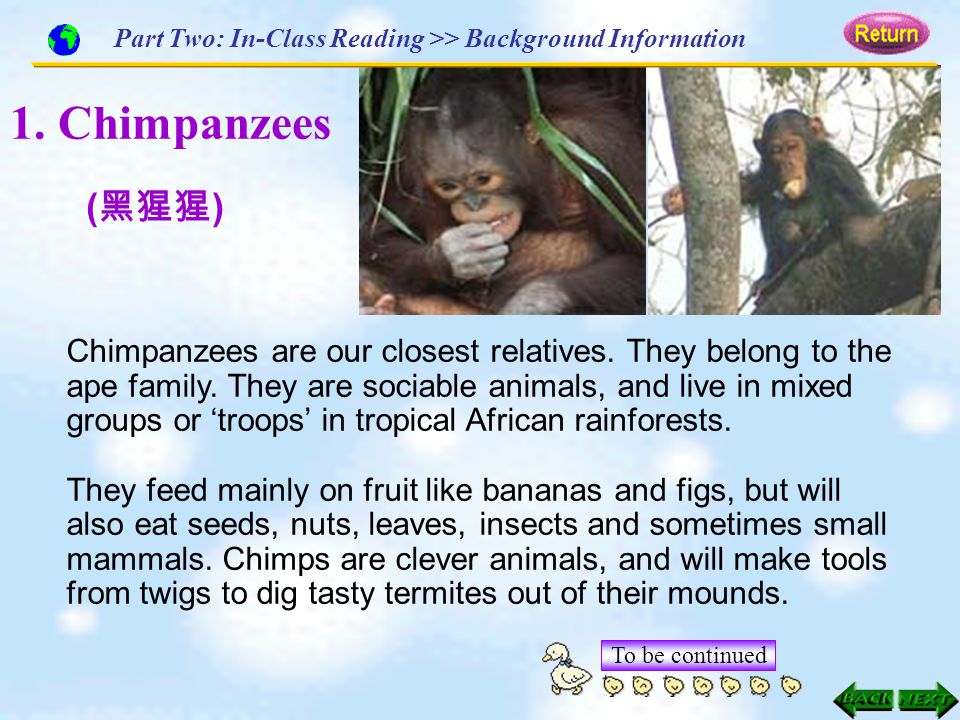 1. Chimpanzees Chimpanzees are our closest relatives. They belong to the ape family. They are sociable animals, and live in mixed groups or 'troops' i