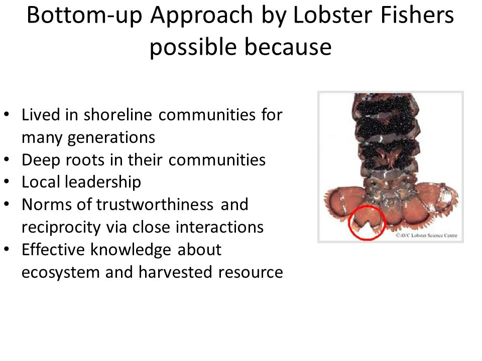 Bottom-up Approach by Lobster Fishers possible because Lived in shoreline communities for many generations Deep roots in their communities Local leadership Norms of trustworthiness and reciprocity via close interactions Effective knowledge about ecosystem and harvested resource