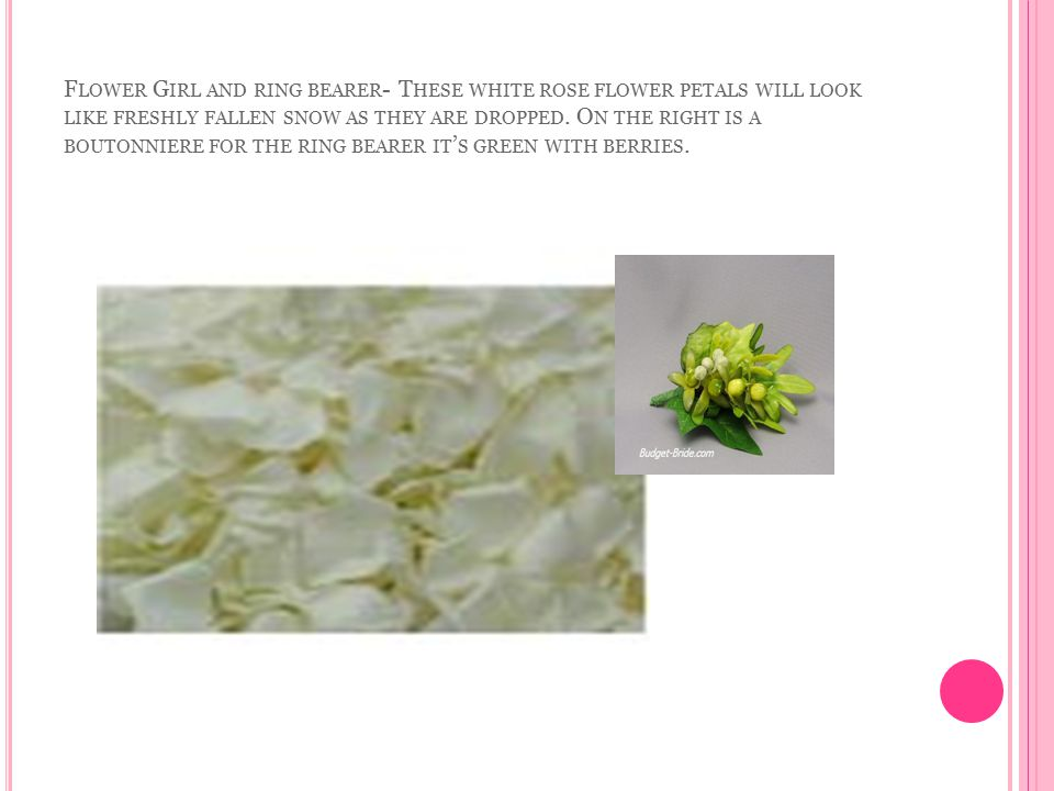 F LOWER G IRL AND RING BEARER - T HESE WHITE ROSE FLOWER PETALS WILL LOOK LIKE FRESHLY FALLEN SNOW AS THEY ARE DROPPED. O N THE RIGHT IS A BOUTONNIERE