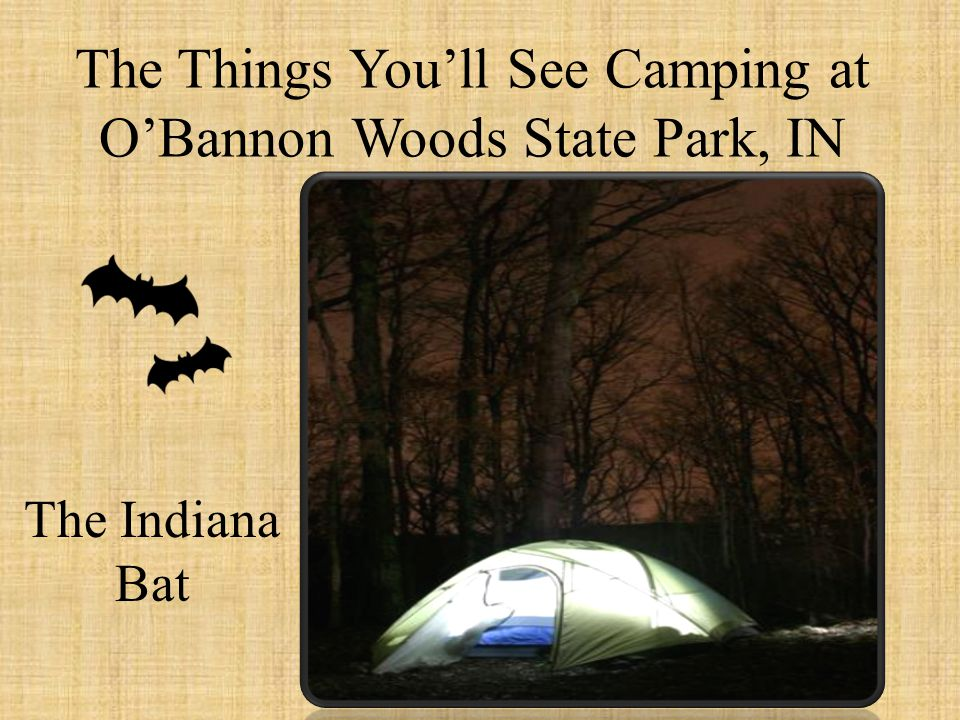 The Things You'll See Camping at O'Bannon Woods State Park, IN The Indiana Bat