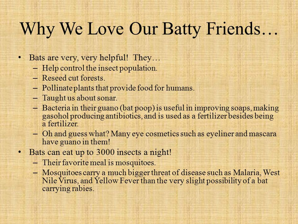 Why We Love Our Batty Friends… Bats are very, very helpful.