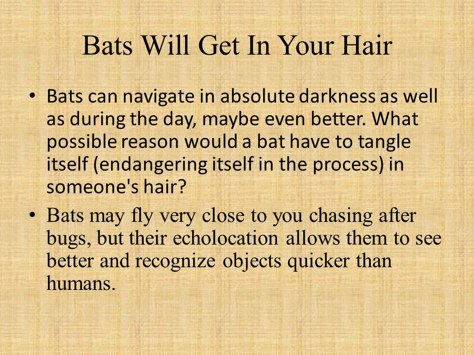 Bats Will Get In Your Hair Bats can navigate in absolute darkness as well as during the day, maybe even better.
