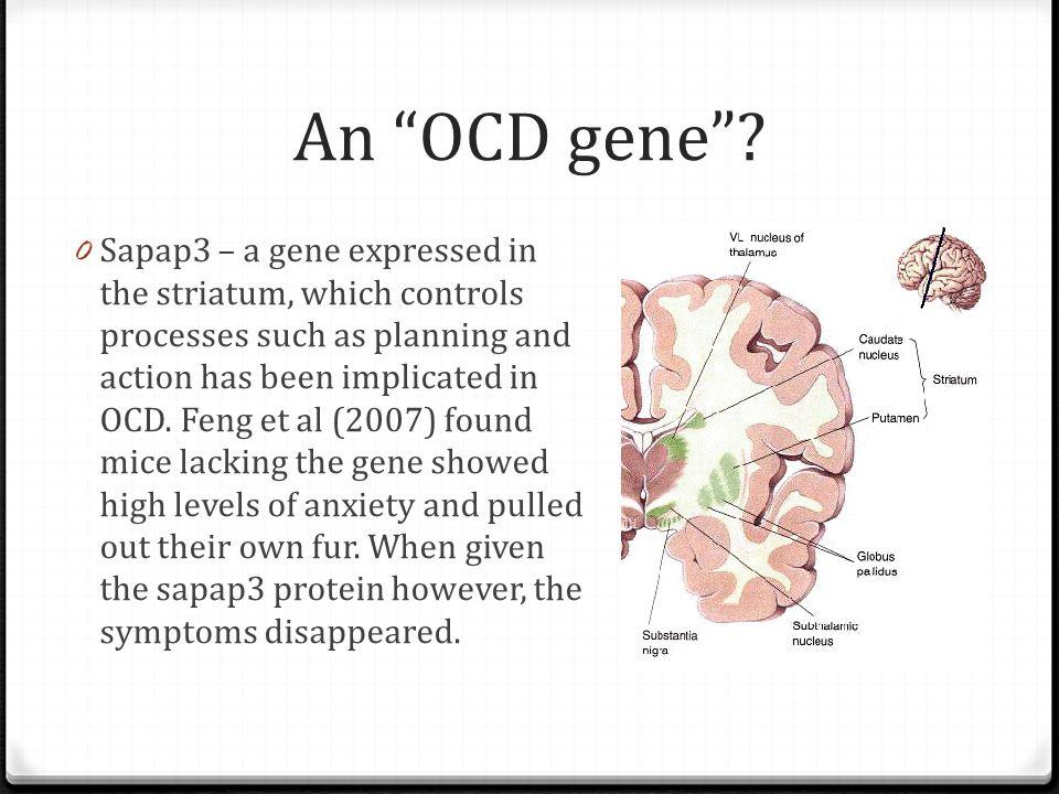 An OCD gene .