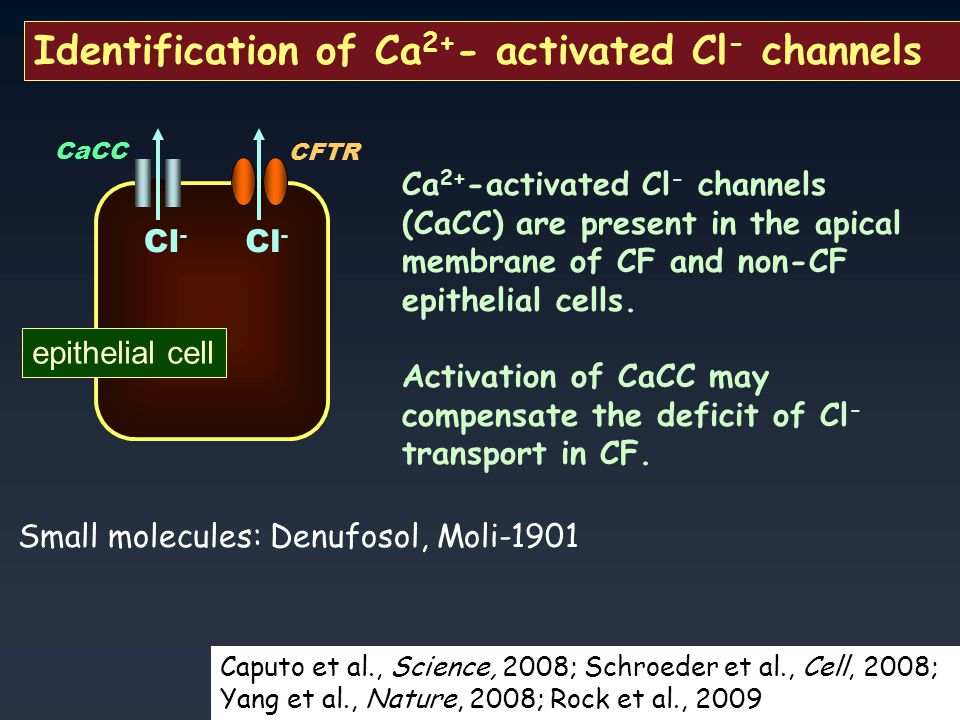 Identification of Ca 2+ - activated Cl - channels CFTR Cl - CaCC Cl - epithelial cell Ca 2+ -activated Cl - channels (CaCC) are present in the apical membrane of CF and non-CF epithelial cells.