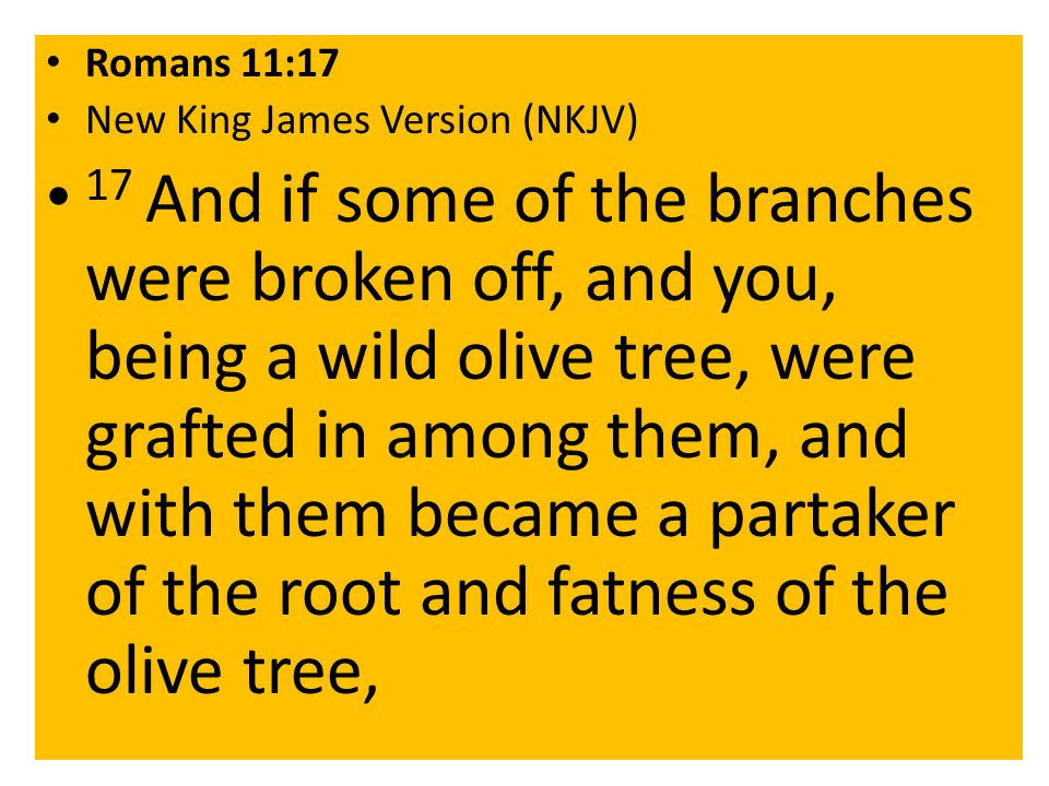Romans 11:17 New King James Version (NKJV) 17 And if some of the branches were broken off, and you, being a wild olive tree, were grafted in among them, and with them became a partaker of the root and fatness of the olive tree,
