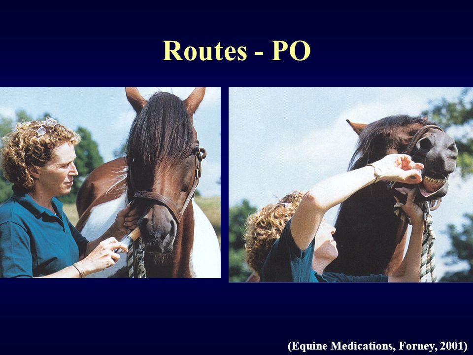Routes - PO (Equine Medications, Forney, 2001)