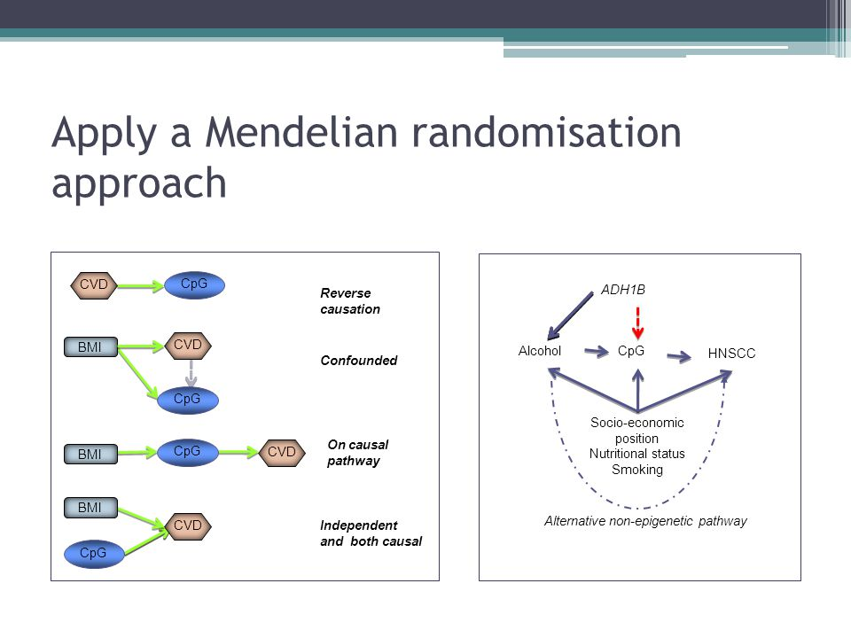 Apply a Mendelian randomisation approach Reverse causation Confounded Independent and both causal CpG On causal pathway CpG BMI CVD CpG CVD BMI ADH1B Socio-economic position Nutritional status Smoking CpG HNSCC Alcohol Alternative non-epigenetic pathway