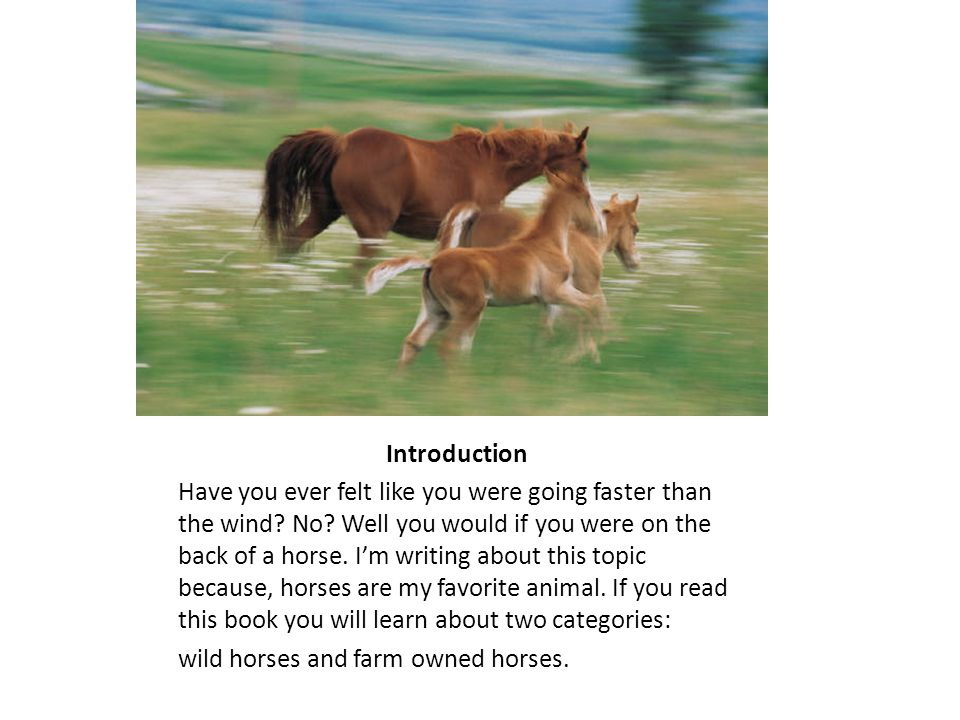 This is a foal Chapter 1: A Foal Is Born Many things happen to a horse when they are born.