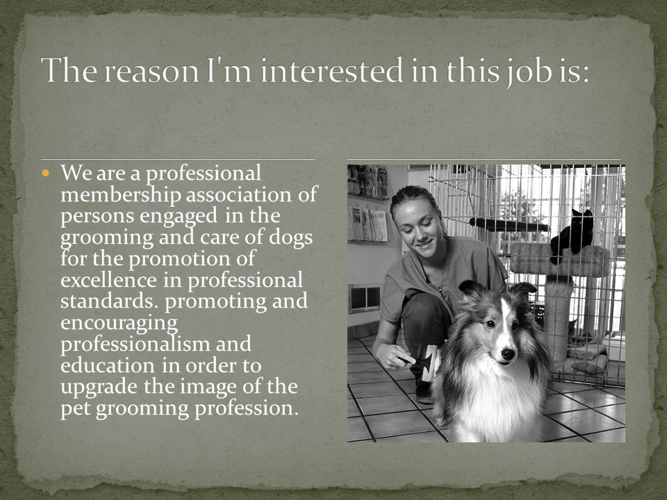 We are a professional membership association of persons engaged in the grooming and care of dogs for the promotion of excellence in professional standards.