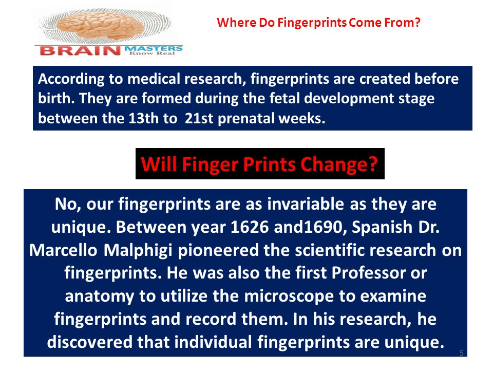 According to medical research, fingerprints are created before birth. They are formed during the fetal development stage between the 13th to 21st pren