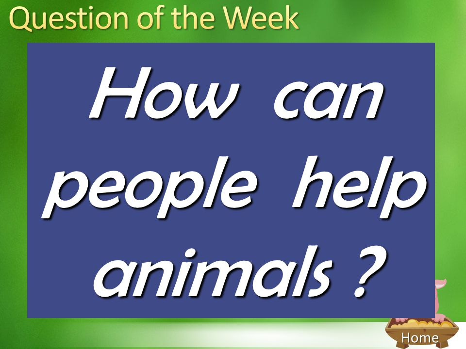 Home How can people help animals ?