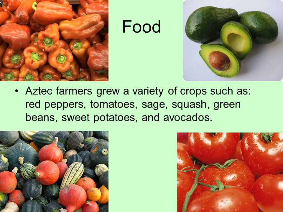Food Aztec farmers grew a variety of crops such as: red peppers, tomatoes, sage, squash, green beans, sweet potatoes, and avocados.