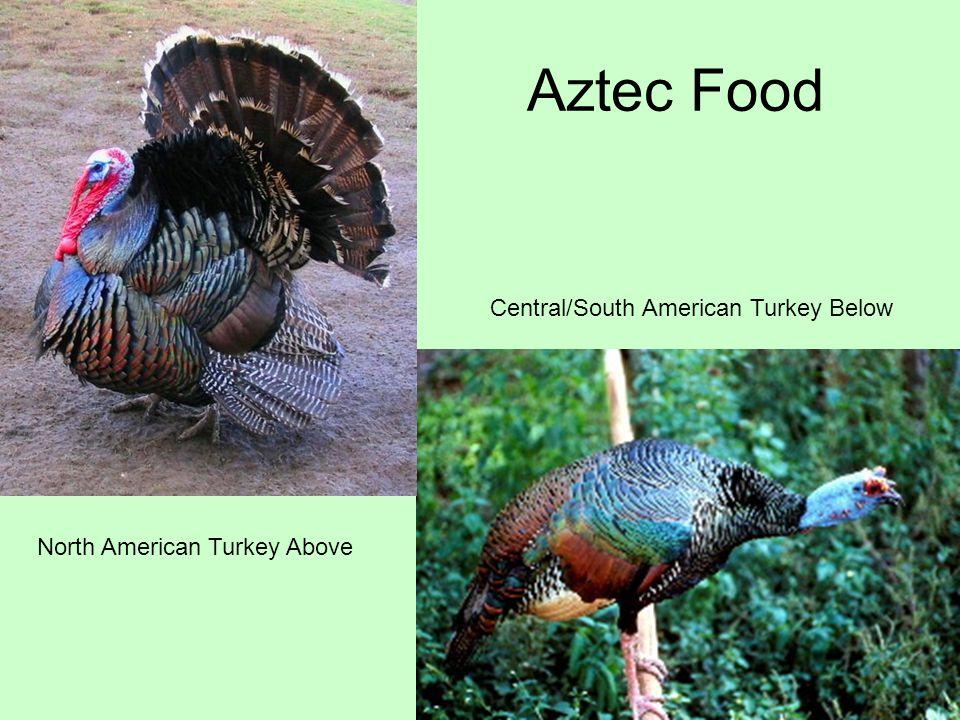 North American Turkey Above Central/South American Turkey Below Aztec Food