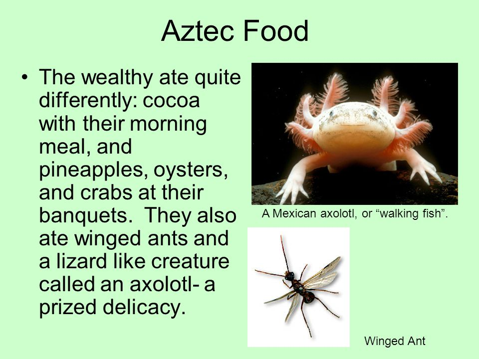 The wealthy ate quite differently: cocoa with their morning meal, and pineapples, oysters, and crabs at their banquets. They also ate winged ants and