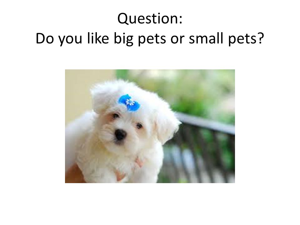 Question: Do you like big pets or small pets