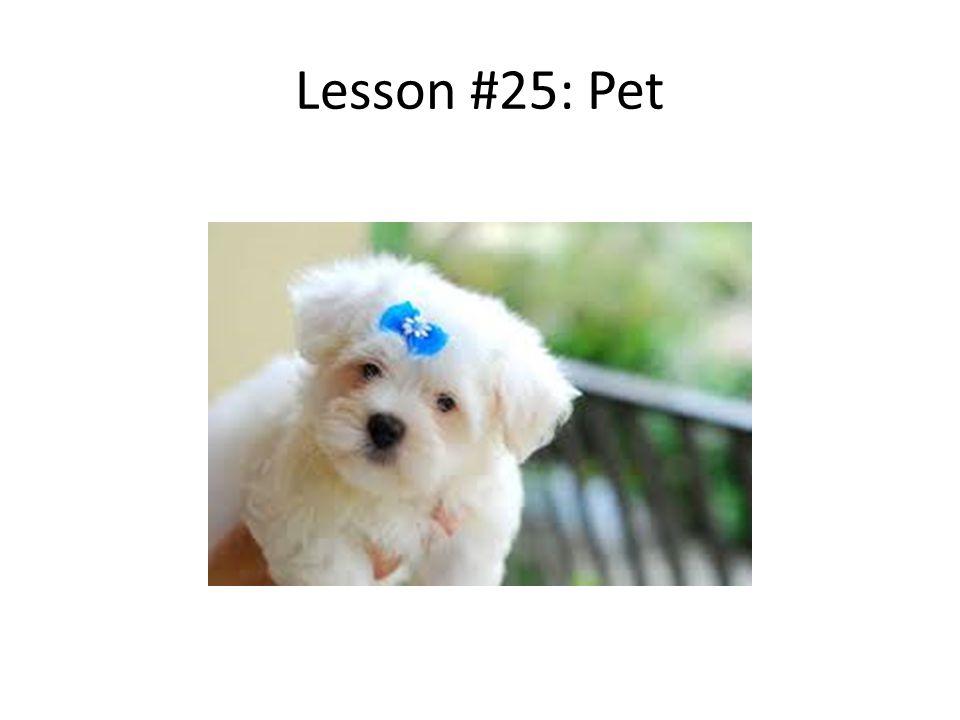 Lesson #25: Pet
