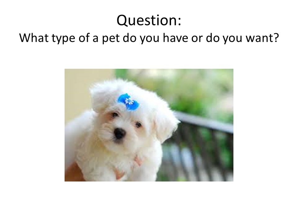 Question: What type of a pet do you have or do you want?