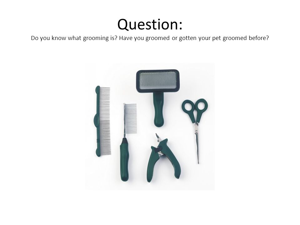 Question: Do you know what grooming is Have you groomed or gotten your pet groomed before