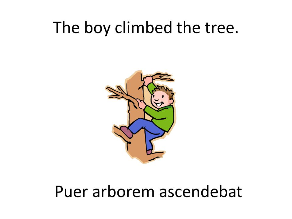 The boy climbed the tree. Puer arborem ascendebat