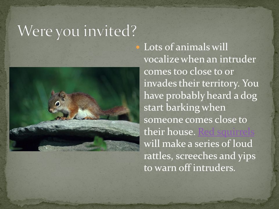 Lots of animals will vocalize when an intruder comes too close to or invades their territory.